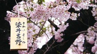 【終止符】ソメイヨシノは韓国起源ではなかった ⇒ 韓国人学者の反応