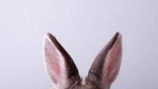 【画像】ウサ耳を付けた可愛すぎる女子高生みつけたwwww