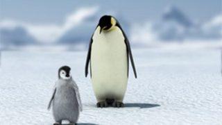【画像】親に放置された子ペンギンの末路www