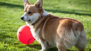【悲報】韓国人さん 隣人のペットの犬を殺し晩餐会に招待