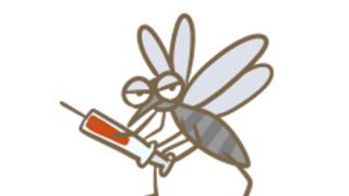【画像】25.8cmの巨大な蚊、ギネス認定 四川で発見