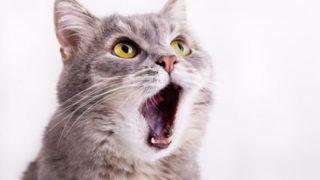 『カラス』に見える『猫』が話題に Googleも間違えるほどの凄さ →画像