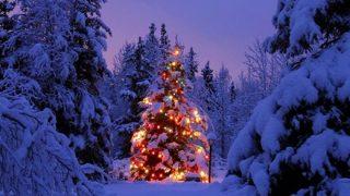 【韓国起源】クリスマスツリーは韓国から渡って行った【ウリジナル】