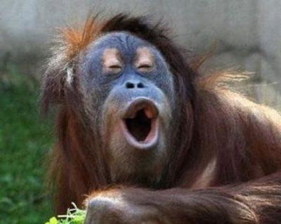 【セクハラ事件】美人飼育員の胸をモミモミしてニッコニコのオラウータンさん