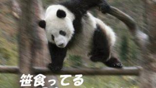 【乞食速報】16万円のベストが9999円!!急げ!!!!