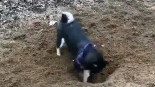 【こういう気分の時】穴を掘ってた犬がどうでもよくなる瞬間ワロタwwwwww