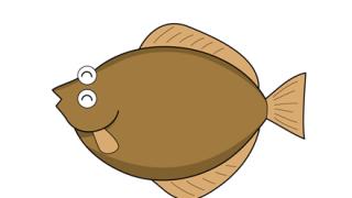 【唖然】北海道の漁港で『ヒラメのバケモノ』を捕獲 →画像