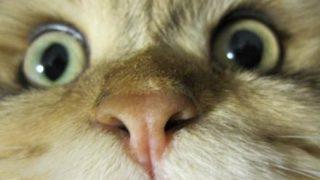【恐怖】突然喋りだす猫がガチで怖い……