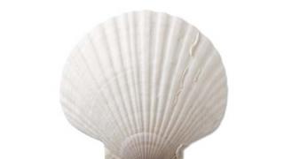 【動画像】30歳グラドルが『貝殻ビキニ姿』を披露
