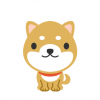 【朗報】柴犬とハスキーの雑種が可愛すぎる →画像