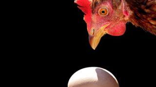 「鶏が先か卵が先か」←これの結論って出たんか?