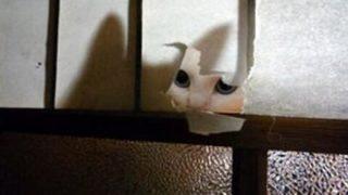 【画像】「お分りいただけただろうか?」幽霊屋敷に子どもの霊が・・・