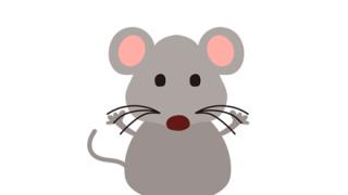 【画像】フィリピンでデカ過ぎるネズミが発見されるwwwww