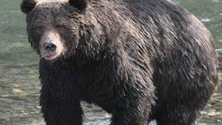 【閲覧注意】野生の熊に1ヶ月監禁された男 ミイラ状態になるもなんとか生還 →動画像