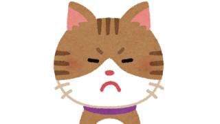 【悲報】ネコさんもサマーカットと称して丸刈りにされる…