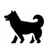 【動画像】興奮するとバッタリ倒れてしまう犬がSNSで人気:治療費集まる