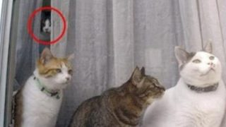 【心霊映像】窓から顔がひょっこり出てくるの覚えてるやつおる?