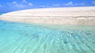 【画像】海でとんでもない生物が発見される