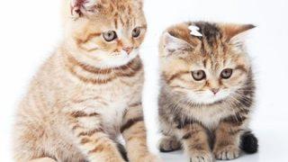 【話題の子猫】うちの子、寝方が独特なんです →画像