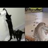 【流行】飼い主「猫がイタズラしたから反省文を首に下げさせて写真撮ったろ!」←これ