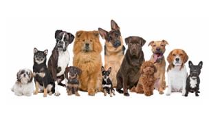 【ランキング】いちばん可愛い犬が決まる →画像