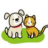 【閲覧注意】犬の群れが猫を襲撃、無残な姿に…