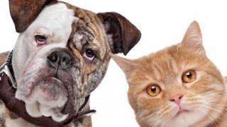 【ミャーオ】世界各国の人に『犬と猫の鳴きマネ』をしてもらった結果 →