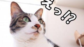 【動画】とんでもない目の色の猫が発見される