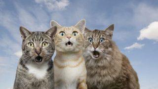 【(ΦωΦ)】とんでもない『バケモノ猫』が発見される →動画像