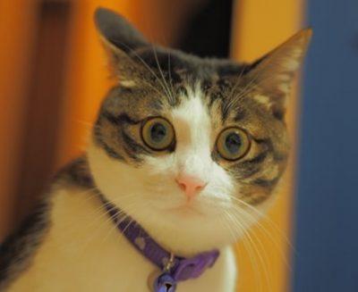 【感情あるわ】ネコでも人間がガイジ行為すればドン引きすることが判明 →動画