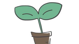 【画像】奇 形 植 物 を 貼 っ て い く ス レ