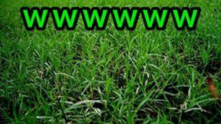 世界一デカい草はえたwwwwwwwWWW