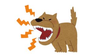 【衝撃】老人、犬にやられ即死 →動画