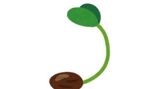 ◆植えないで!◆中国から届く謎の種子、これらしい