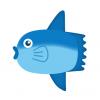 ◆世界初◆これまで未発見だった「巨大マンボウの稚魚」がついに見つかる!金平糖みたいで可愛い!