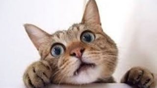 【画像】子猫さん、飼い主のオッパイに挟まれてしまう・・・