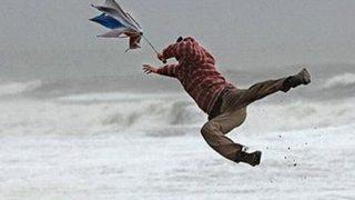 【悲報】強風でなんのイッヌかわからなくなる →画像