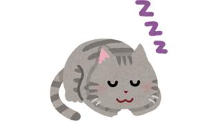 【感動】猫の『いびき』ワロタwwwwww