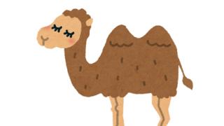 ◆GIF画像◆ラクダさん、速すぎる……