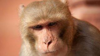 【衝撃映像】幼児が『猿に誘拐』される動画が怖すぎる・・・