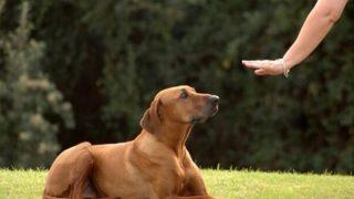 ◆犬の言葉◆がわかる集団が『犬の言いたい事』を教えてくれる件 →画像