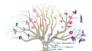 ◆進化論◆を『否定』する生物 →画像
