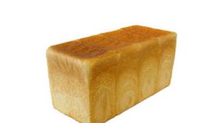 【画像】食パンみたいな柴犬、何食ったらこうなるんだよ・・・