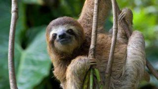 ◆動画あり◆ナマケモノさん、お礼を言える動物だった