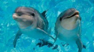 【名器予感】イルカのまんまん工口すぎwwwww