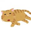 ◆画像◆ダウン症のネコが怖すぎる