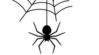 家の中のクモを殺さないようにした結果