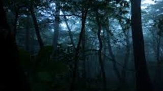 【不思議な森】九州のとある村、森の怖い話を語りたい