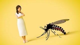 【退治】手や壁を汚さない『蚊』を『気絶』させてとる方法