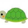 【画像】『双頭の亀』が思ってたのと違うwwwwwwwww